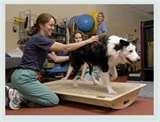 Physical Medical Rehabilitation Photos